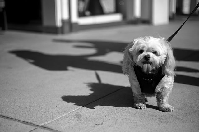 Rodeo Drive in Los Angeles. Leica M9 with Leica 50mm Summicron-M f/2.0