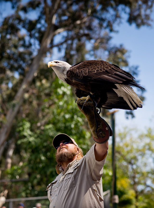 Bird show at Glendale ZOO, Los Angeles. Leica M 240 with Leica 90mm APO-Summicron-M ASPH f/2.0. © 2016 Thorsten Overgaard.