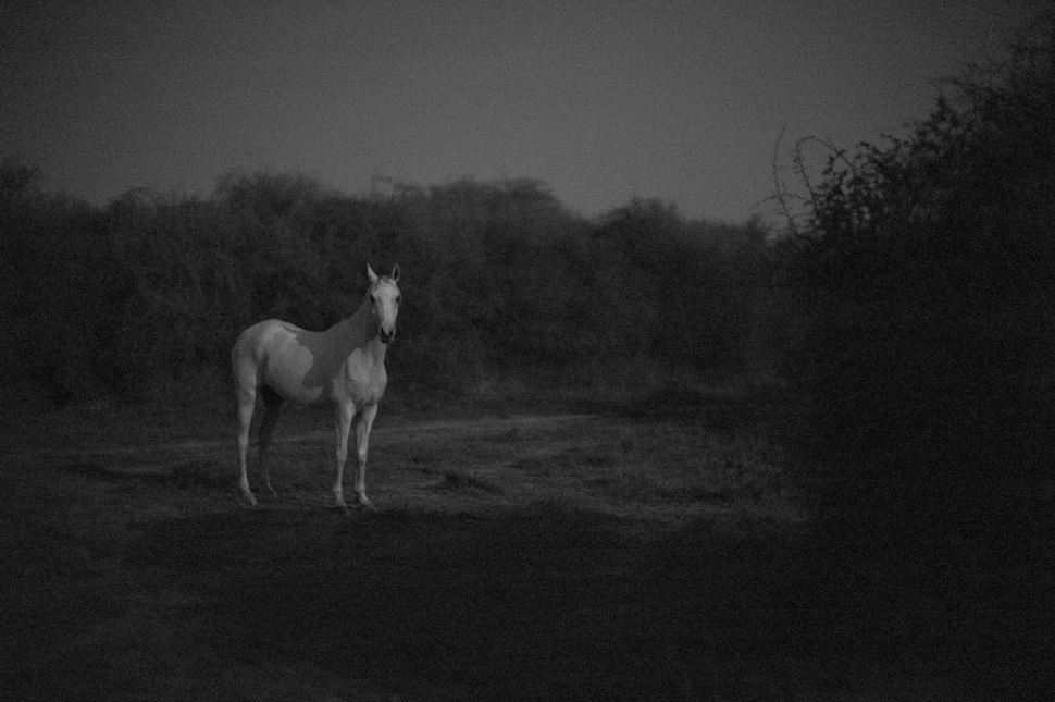 Horse by moonlight in Qatar, January 27, 2013. © Thorsten Overgaard. Leica M Monochrom with Leica 50mm Noctilux-M ASPH f/0.95. 6400 ISO.