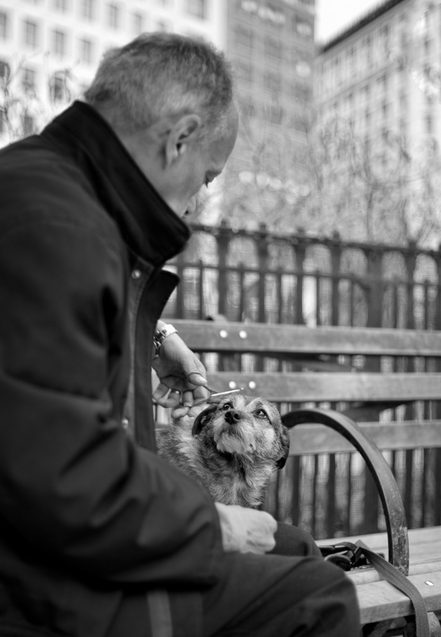 Getting a haircut in Madison Square Park, New York. Leica M 240 with Leica 35mm Summilux-M ASPHERICAL f/1.4 AA. © 2016 Thorsetn Overgaard.