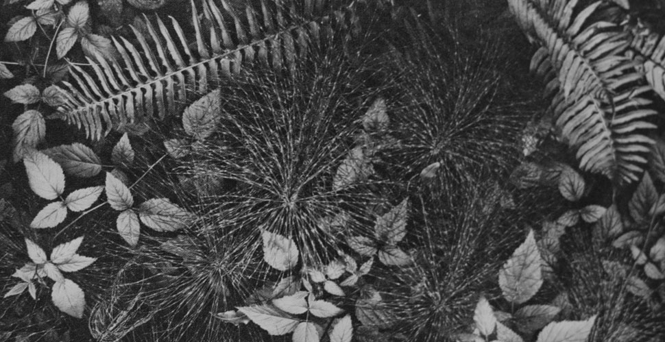 Ansel Adams Leaves The Camera Reveals Pattern Of Nature 4x5