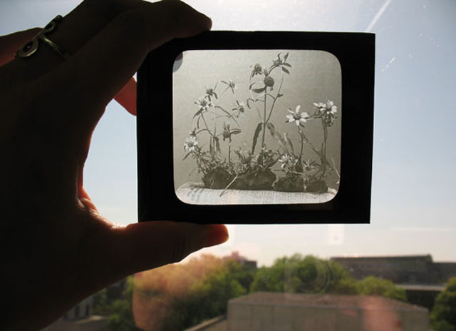 Lantern slide from early 1900's by Ada Hayden.